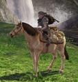 Schatzbepacktes Pony